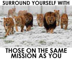 lions on a mission